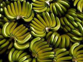 Bananas - especialmente no sul da Índia é um importante alimento para a população vegetariana muitos.