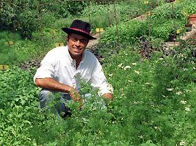 As propriedades curativas das ervas são conhecidas por centenas de anos.