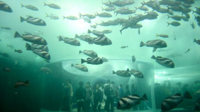 O oceano é o foco da Expo.