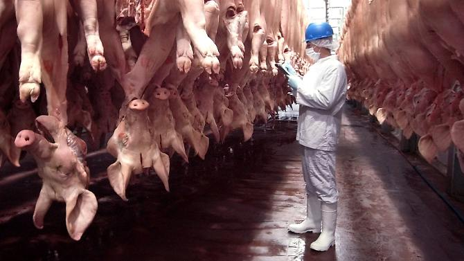 O operador justifica o abate de modo a que uma remoção dos animais seria muito caro.